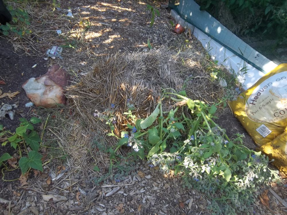 growing plants in hay bales Eco Footprint ~ South Africa: Straw (Hay) bale gardening - part 2