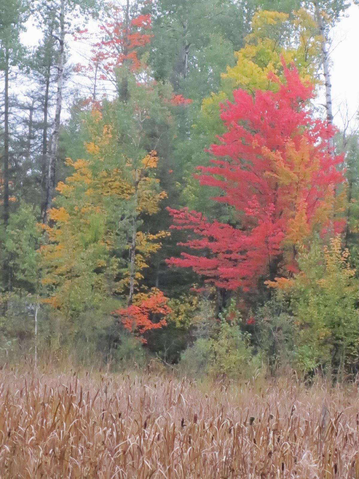 Fall colors, ely, minnesota, huisman, concepts, john Huisman