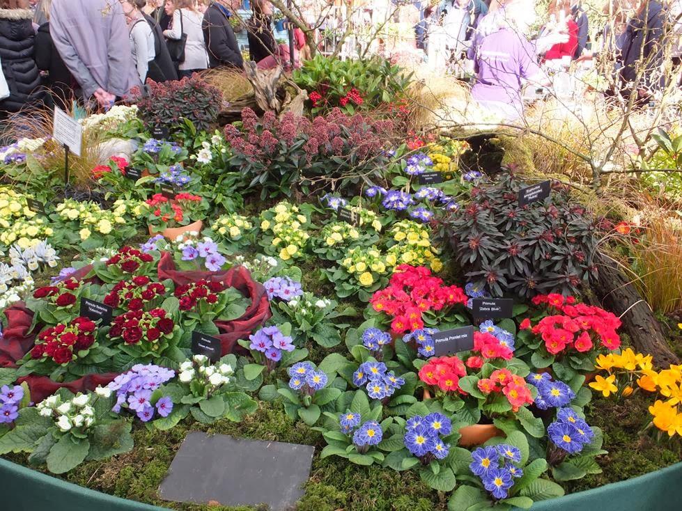 Caths Garden Plants