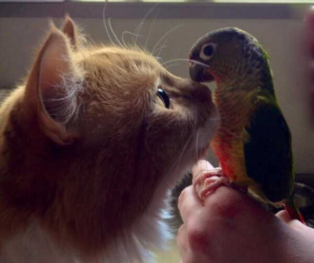 Funny animals of the week - 21 August 2015, funny animal photos, best animal photo, funny animal