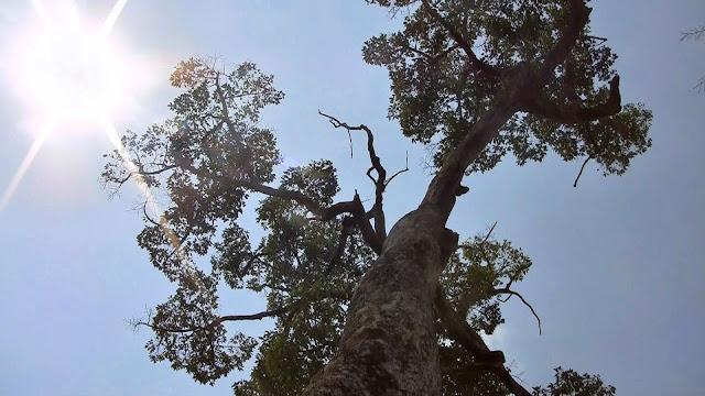 Verdure et forêts du Cambodge. Les plateaux annamites