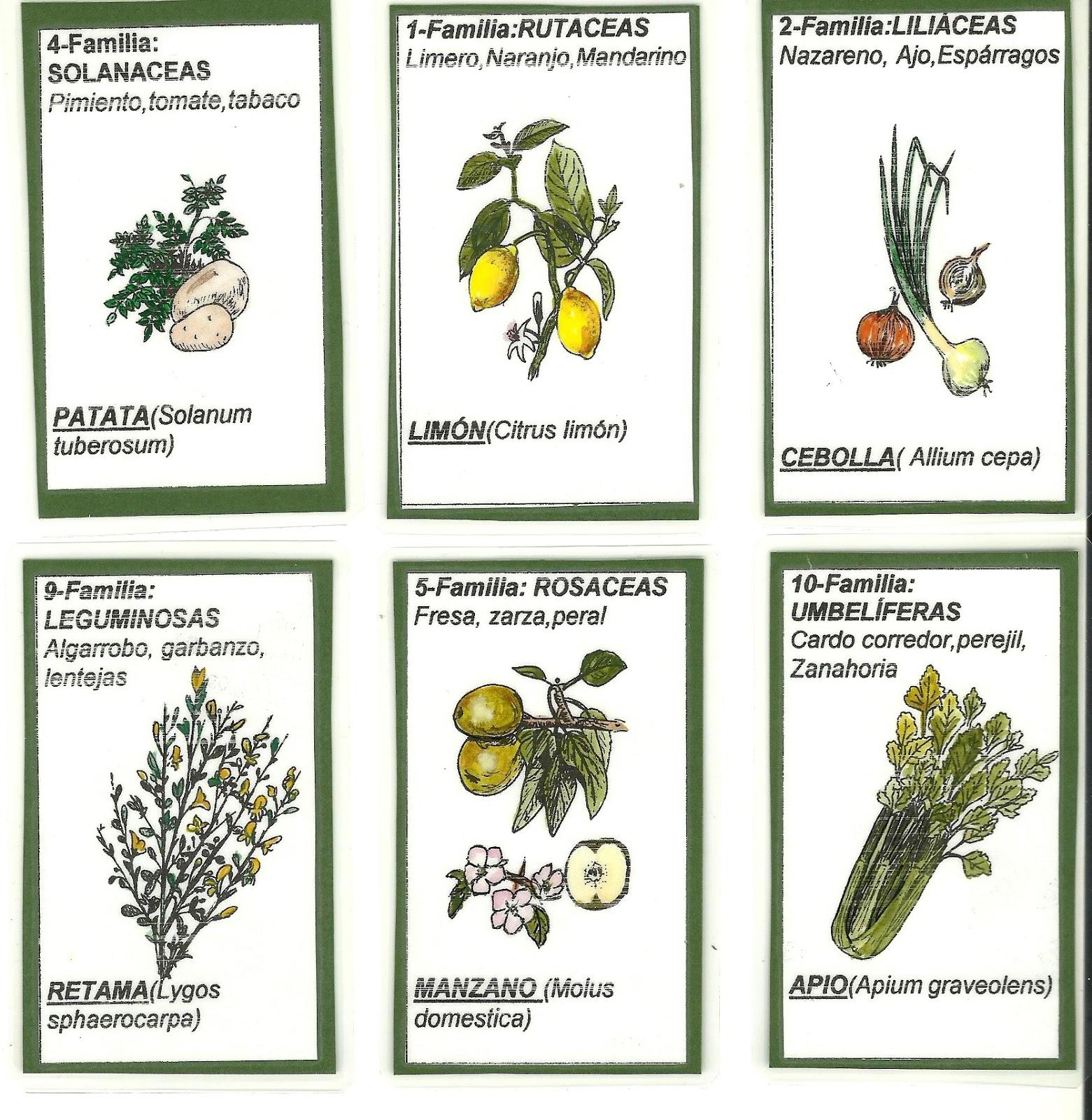 Perez Davila Enseñando botánica