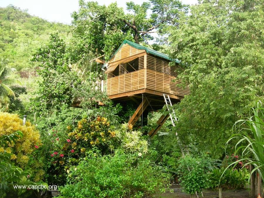 Casa del árbol en el Caribe