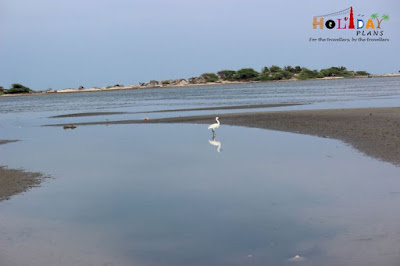 Bird in the backgroung of Bay of Bengal in dhanushkodi
