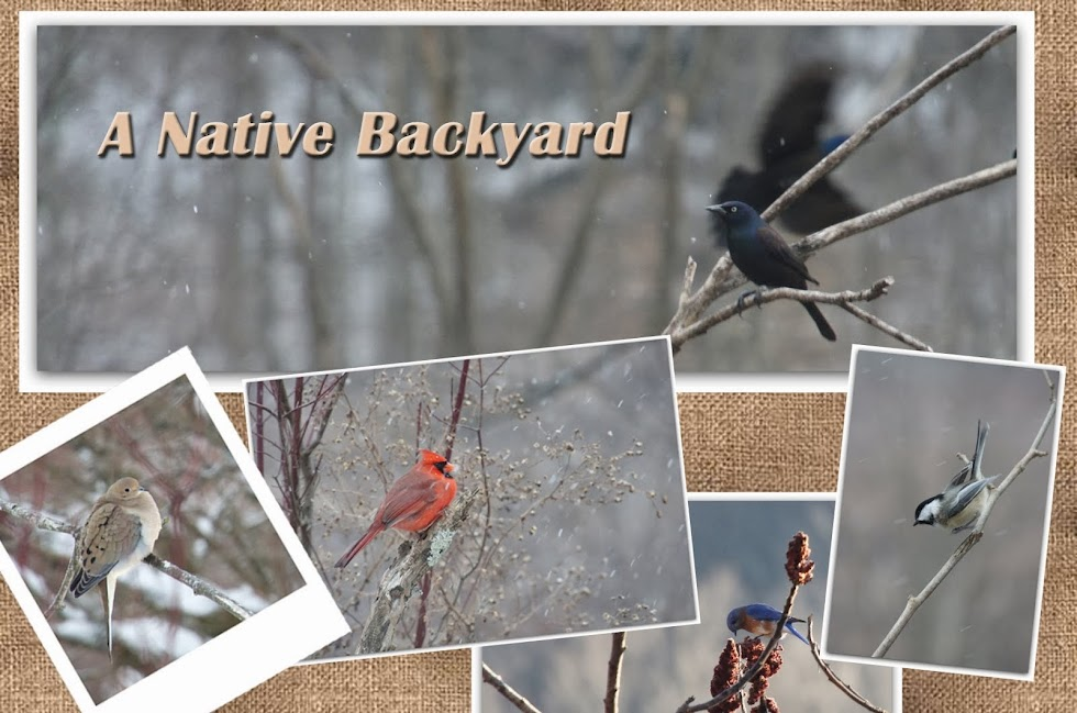 A Native Backyard