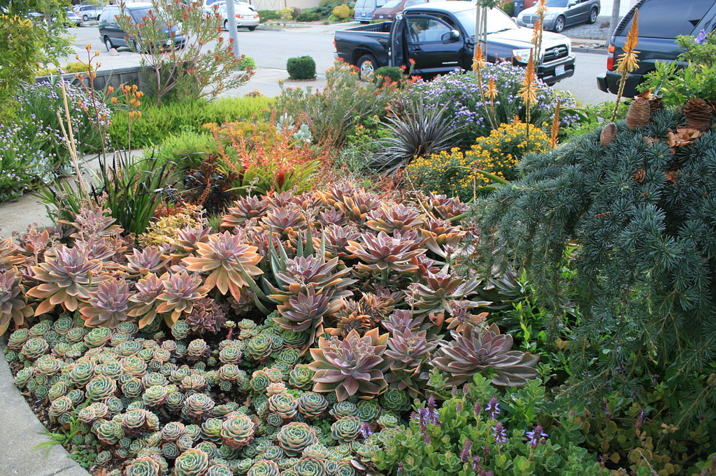 1000 images about desert landscaping on pinterest for Garden design with succulents