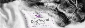 dogw0rld.blogspot.com
