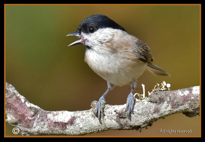 1000 pattes wildlife gateway au jardin les petits oiseaux