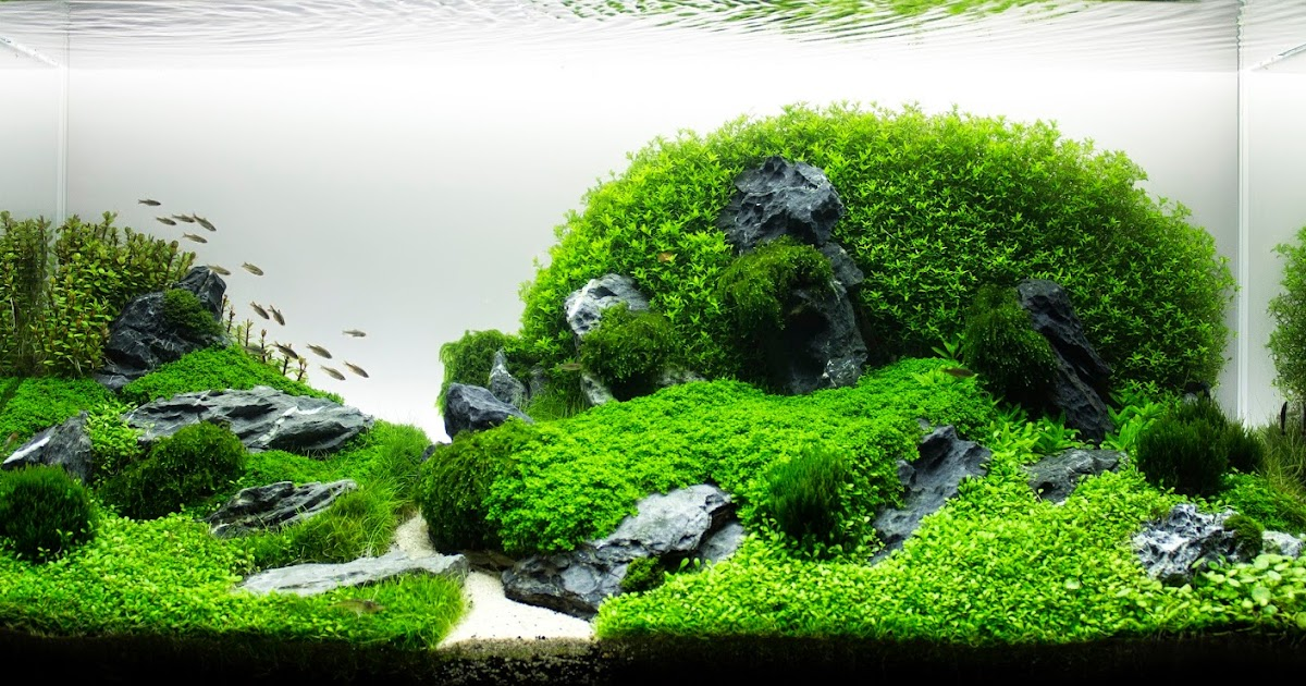 Aquascaping spain green gudar by raul gargallo - Aquascape espana ...