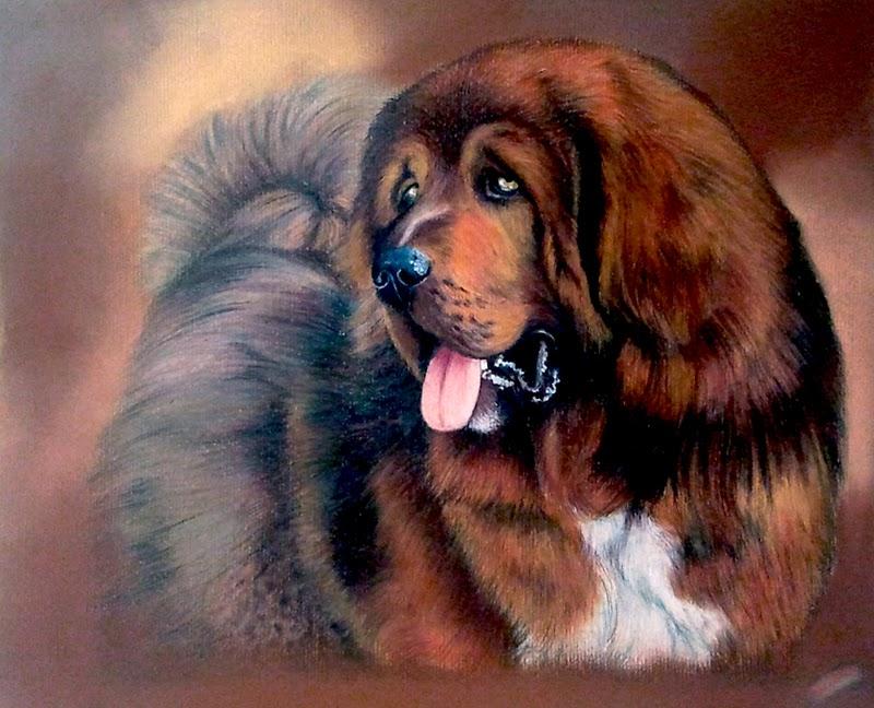 Mastino tibetano derwent drawing pastelli rembrandt ritratto cane matita colorata