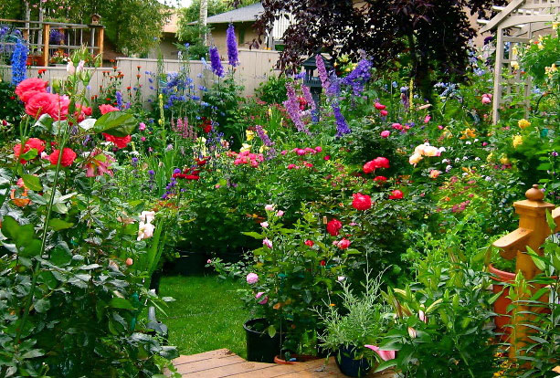 Backyard Flowers :  garden? When you pack in lots of plants there is less room for weeds