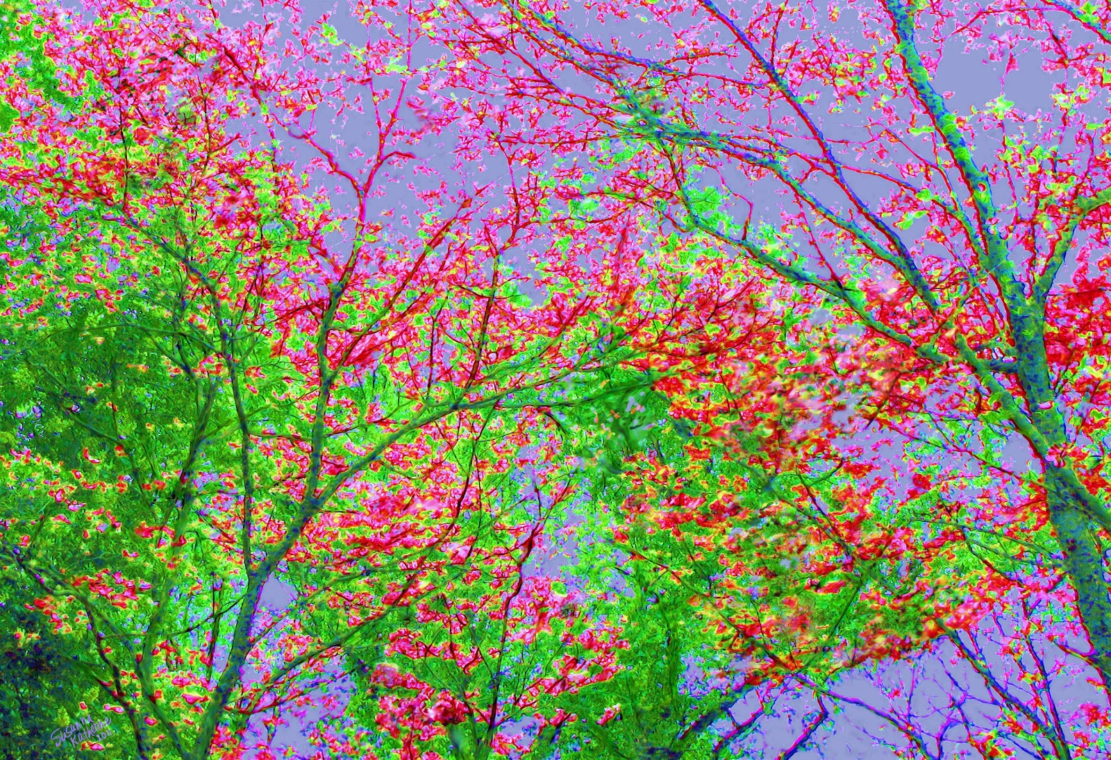 Colorful Branch of Trees Painting Background | Colorful Background ...