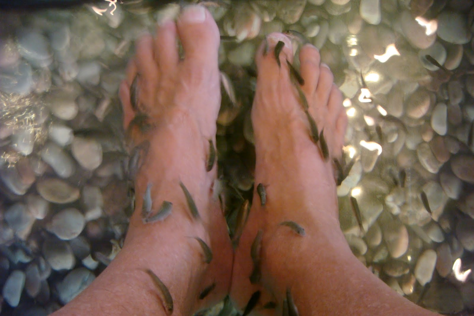 Living in ecstasea the fish spa for Fish eating dead skin pedicure