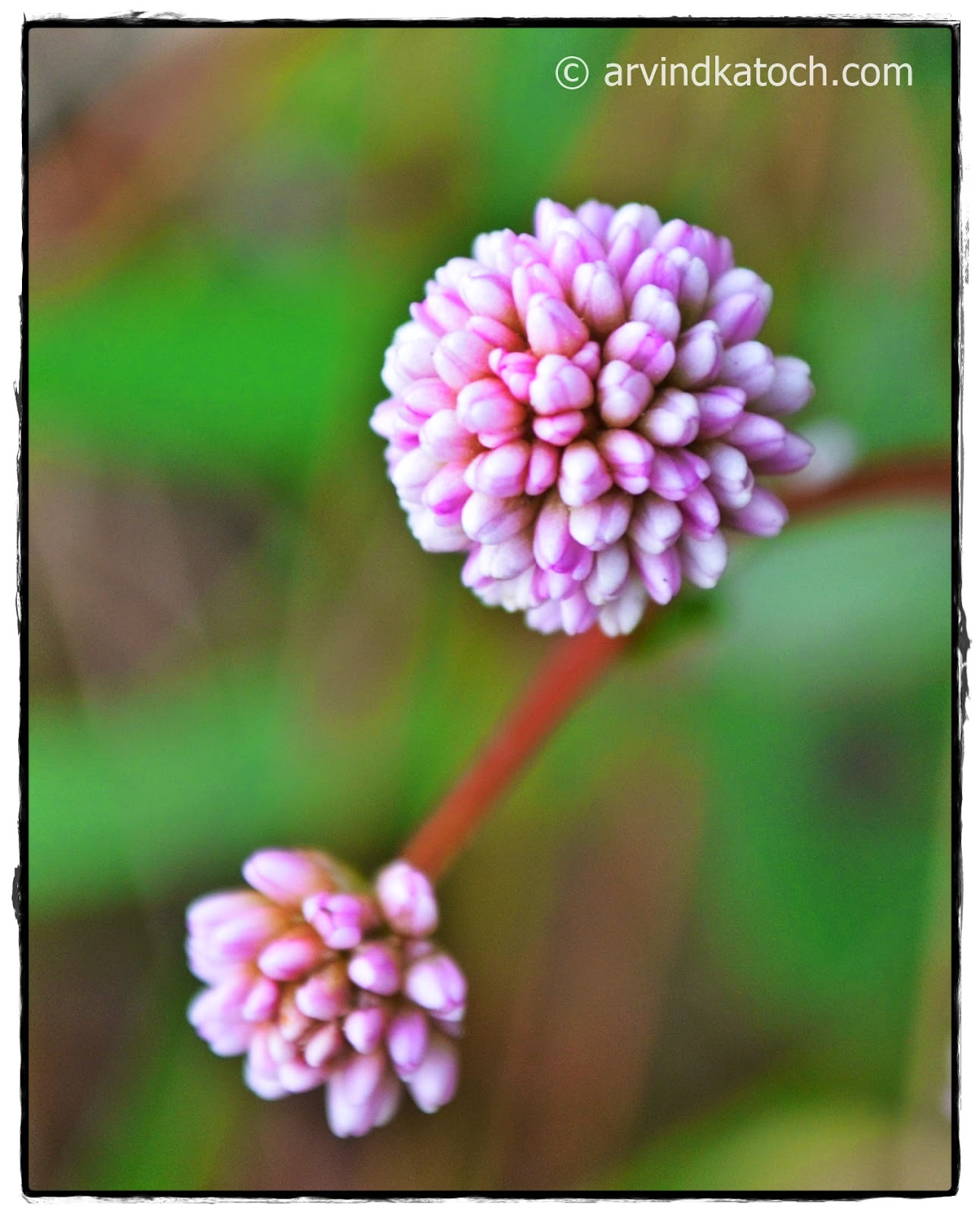 Micro, Small flowers, tiny, Pink Flowers, Pink, flower,