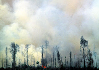 desmatamento na Amazônia - foto de Rogério Assis/Fotosite