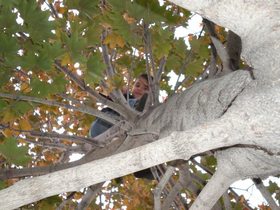 John tree