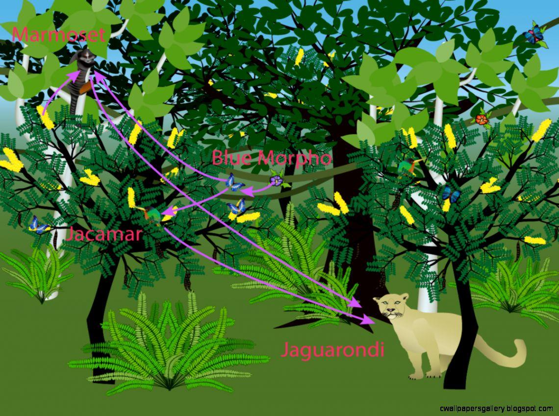 Tropical Rainforest Food Web Experiment