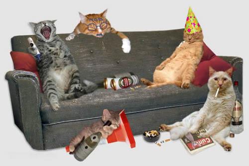 Las fotos más graciosas de gatos