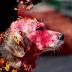 Festival Hindu no Nepal celebra o amor aos cachorros