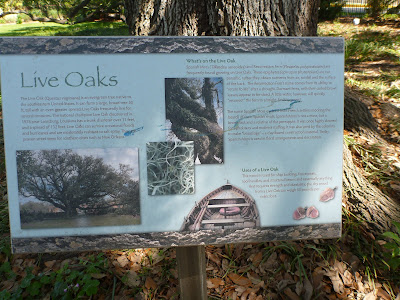 Live Oak Information – City Park Botanical Garden, New Orleans
