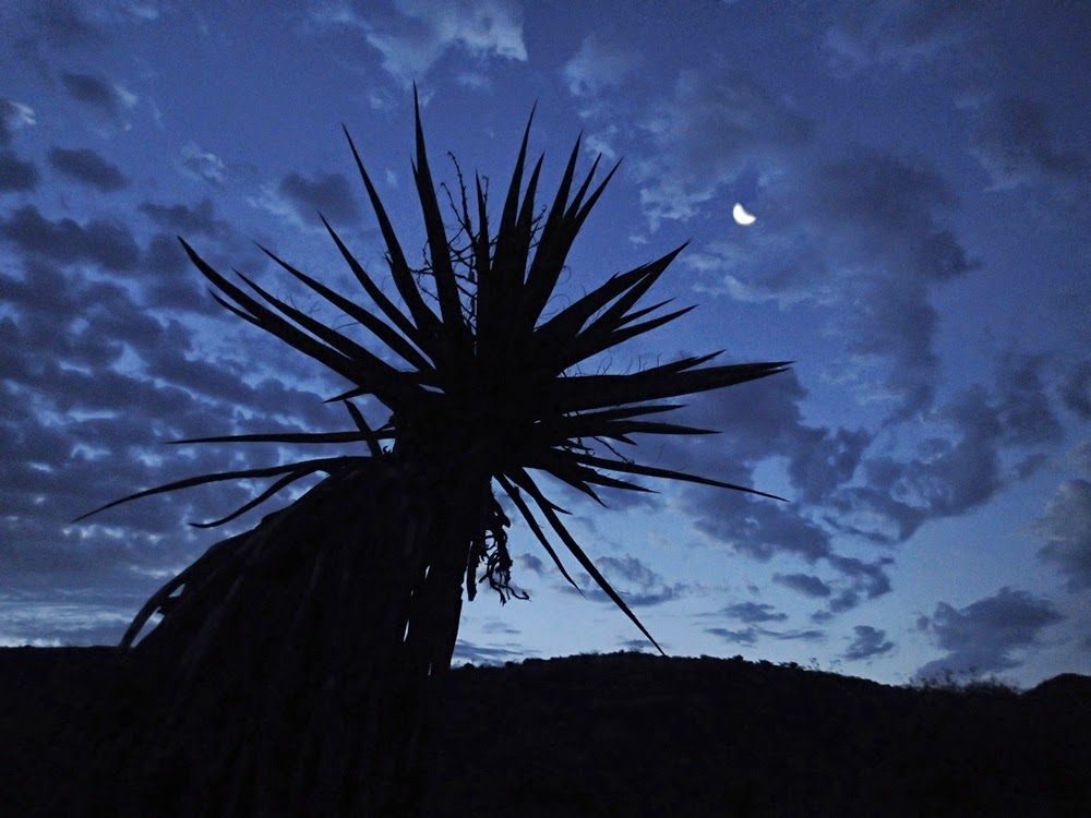 Mohave Yucca and the Moon, descending to Lake Mohave