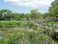 八条ヶ池の西池には水生植物ゾーンがある。
