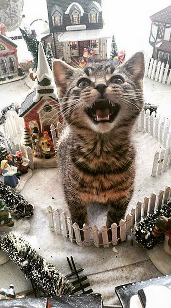 cat photos, funny cat, adorable cats