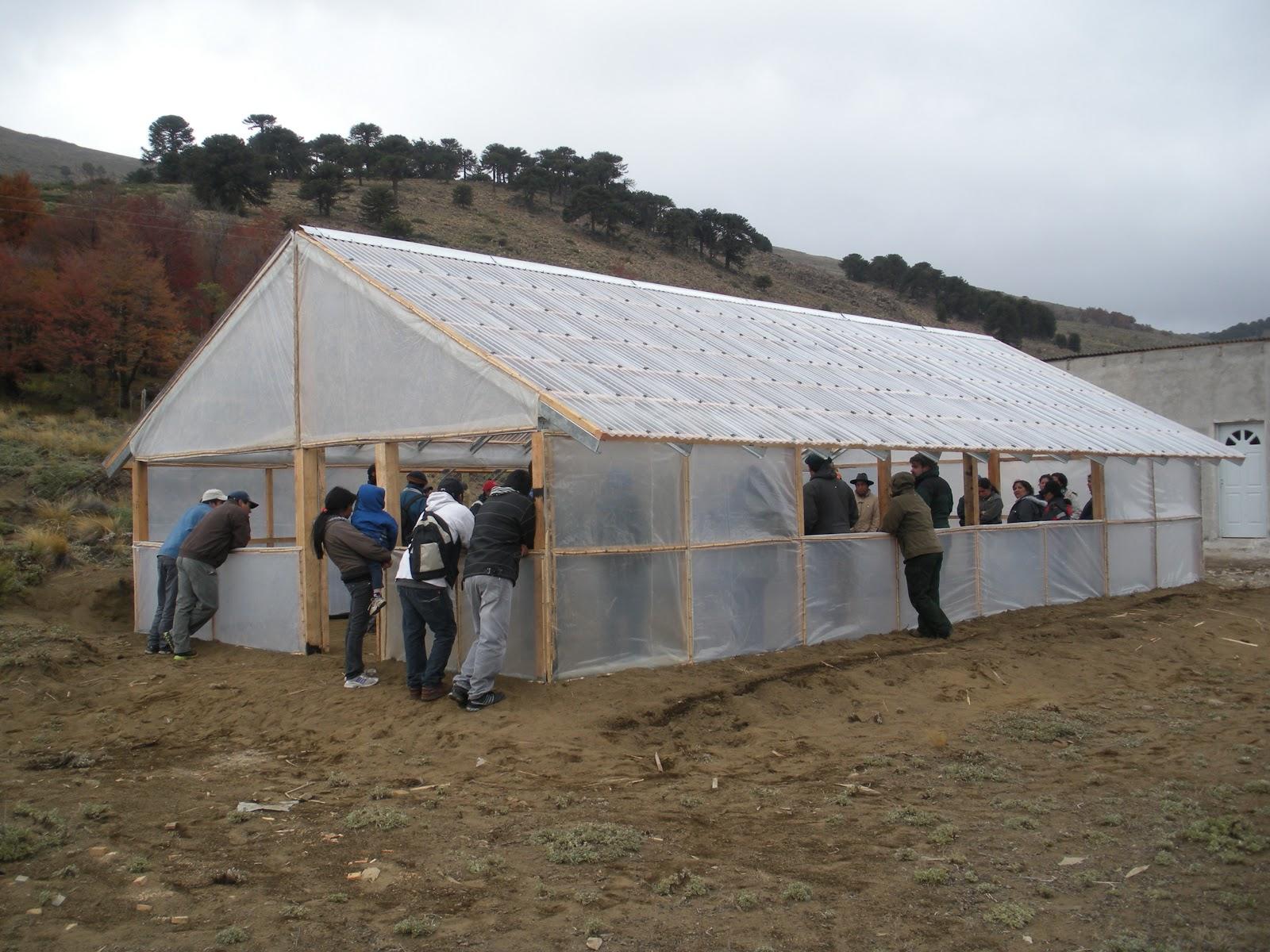Patagonia andina forestal mayo 2013 for Proyecto productivo de vivero forestal