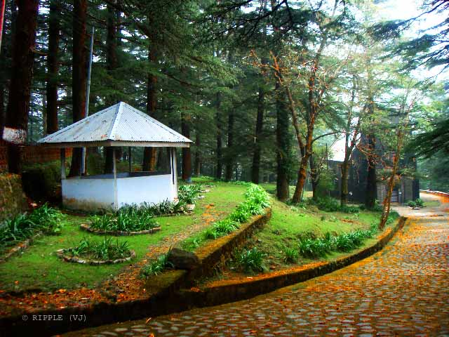 A colorful entry of St. John's Church in Mcleodganj !!! Mcleodganj is one of the popular tourist destination in Himachal Pradesh, INDIA... and if you are there during right season, these kind of colors are normal to see in the forest which comes on the way to Mcleodganj from Dharmshala !!! This orangish path in the green forest leads to main entry of St. John's Church in Mcleodganj. And of course, there are lot many other things to explore around Mcleodganj, like Tibetan culture, multi-cuisune food, waterfalls, trekking etc..