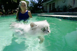 funny cat in water  swiming with carry