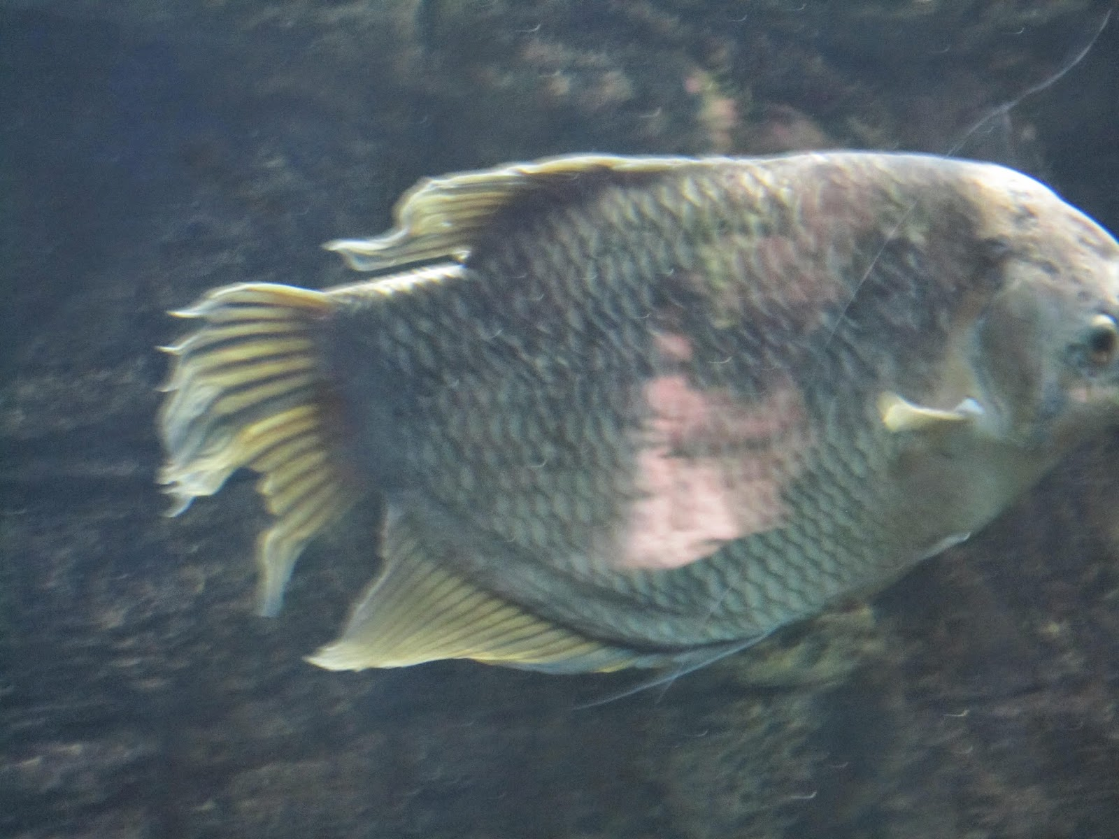 fish, zoo, Toronto Zoo, animals, animal photography