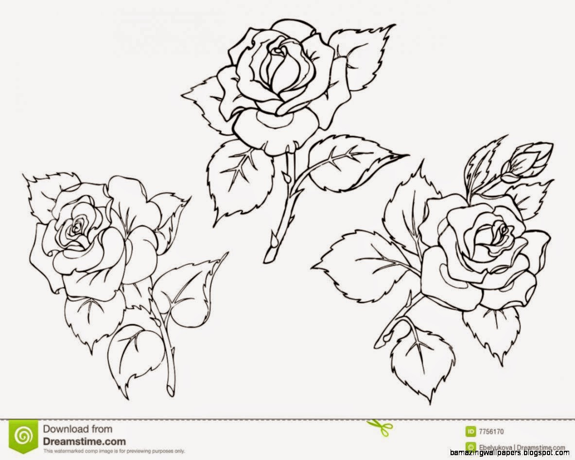 Vector Roses Trace Of Freehand Drawing Stock Photo   Image 7756170