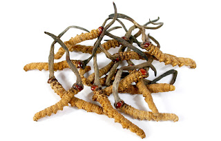 Cordyceps sinensis is treatment of sexual dysfunction.