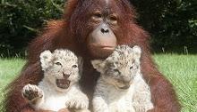 Não imites nada nem ninguém. Um leão que copia um leão torna-se um macaco.