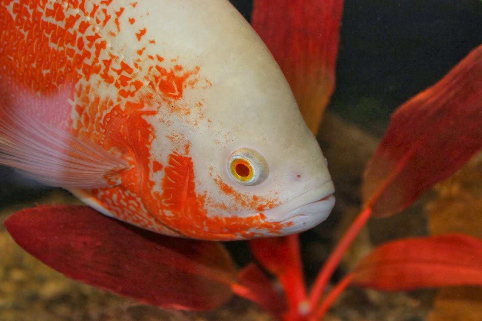 Amazing Fish: 2013
