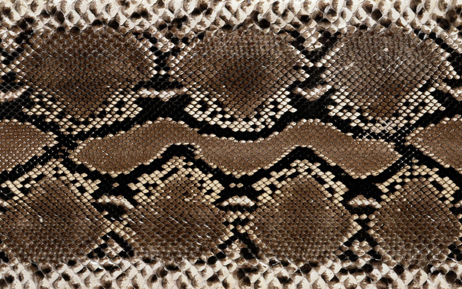 Wallpapers Snake Skin Wallpapers