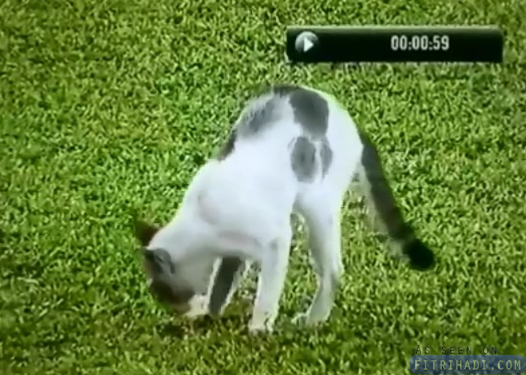 video kucing berak johor vs pahang