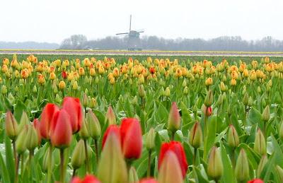 фото-весенних-цветов