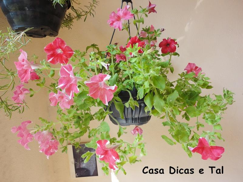 Casa dicas e tal flores do meu jardim parte 2 for Petunie inverno
