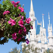 All around Disney World I noticed endless amounts of beautiful flowers in . (disney world flowers castle )
