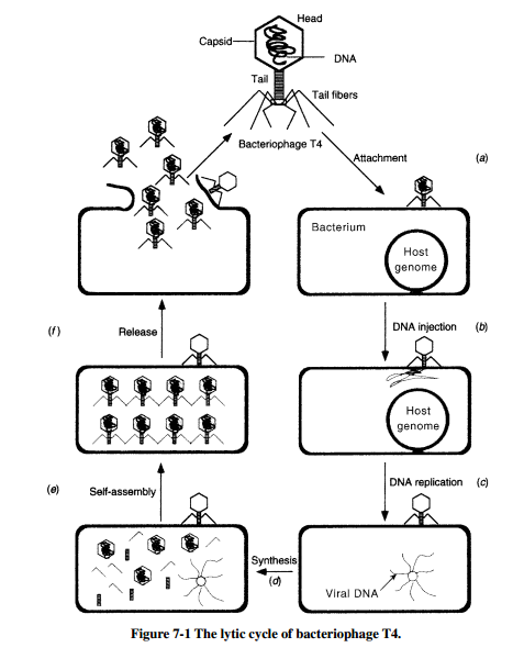 Bacterial genetics and bacteriophages materi kuliah bacterial genetics and bacteriophages ccuart Images