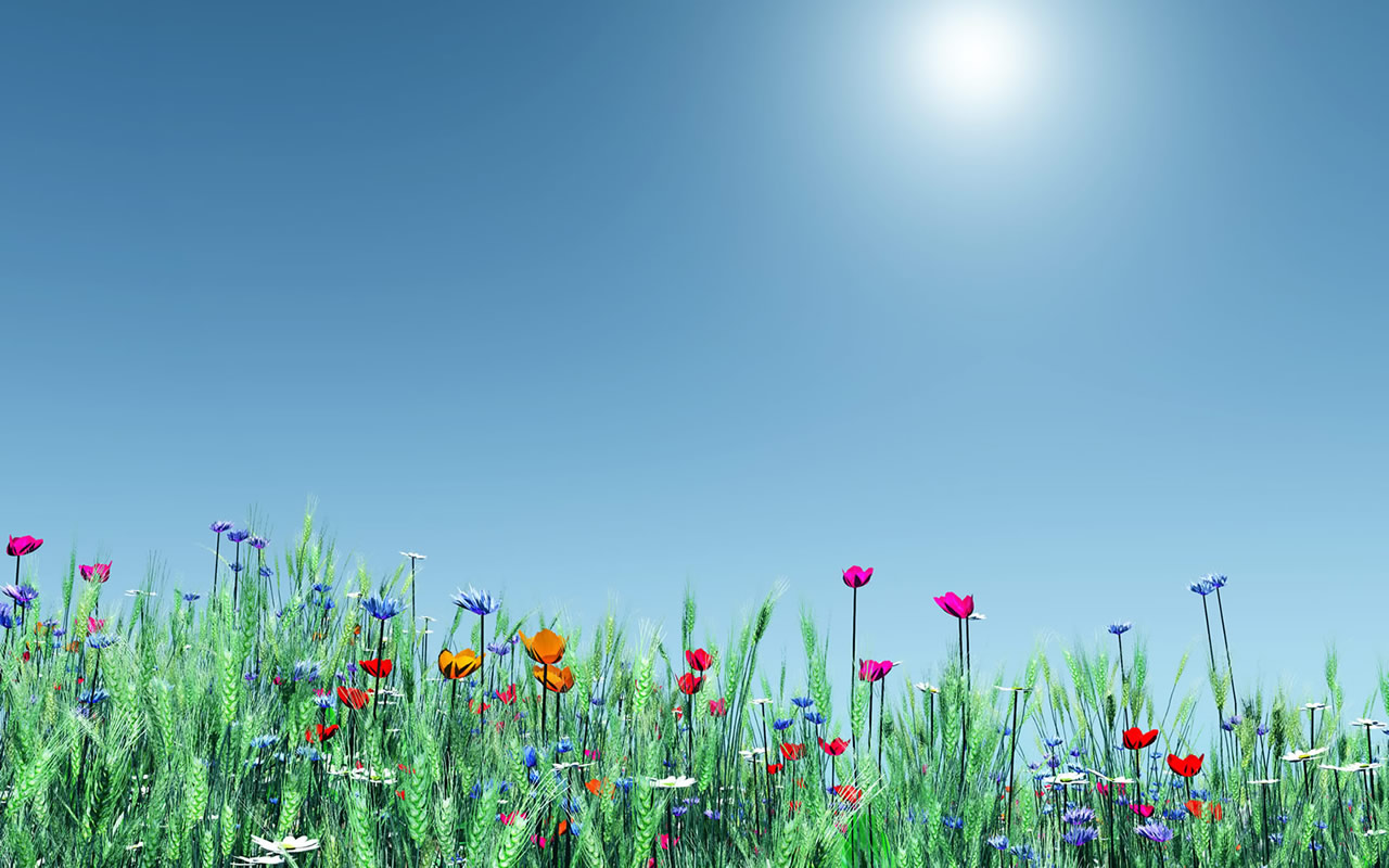 flowers wallpapers: may 2011