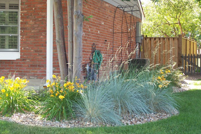 Denver landscape plants blue oat grass avena grass for Spiky ornamental grass