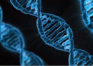 """Cientistas descobriram o mecanismo pelo qual as células tumorais conseguem """"escapar"""" de seu local original (tumor primário) e provocar metástases, como noticiou a Revista INFO. Os resultados deste trabalho, comandado por Manel Esteller, diretor do Programa de Epigenética e Biologia do Câncer do Instituto de Pesquisas Biomédicas de Bellvitge, em Barcelona, foram publicados na revista Nature Medicine. O estudo foi feito nos melanomas, mas a pesquisa indica que este mecanismo se repete em câncer de cólon e de mama."""