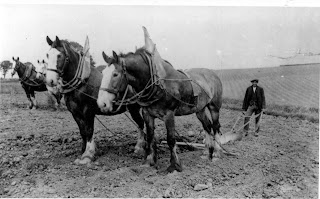 Black and white photo of 1800s plowing fields hard labor midwest