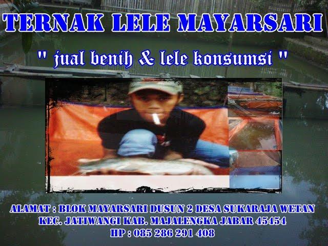 TERNAK LELE MAYARSARI
