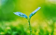 Plants HD