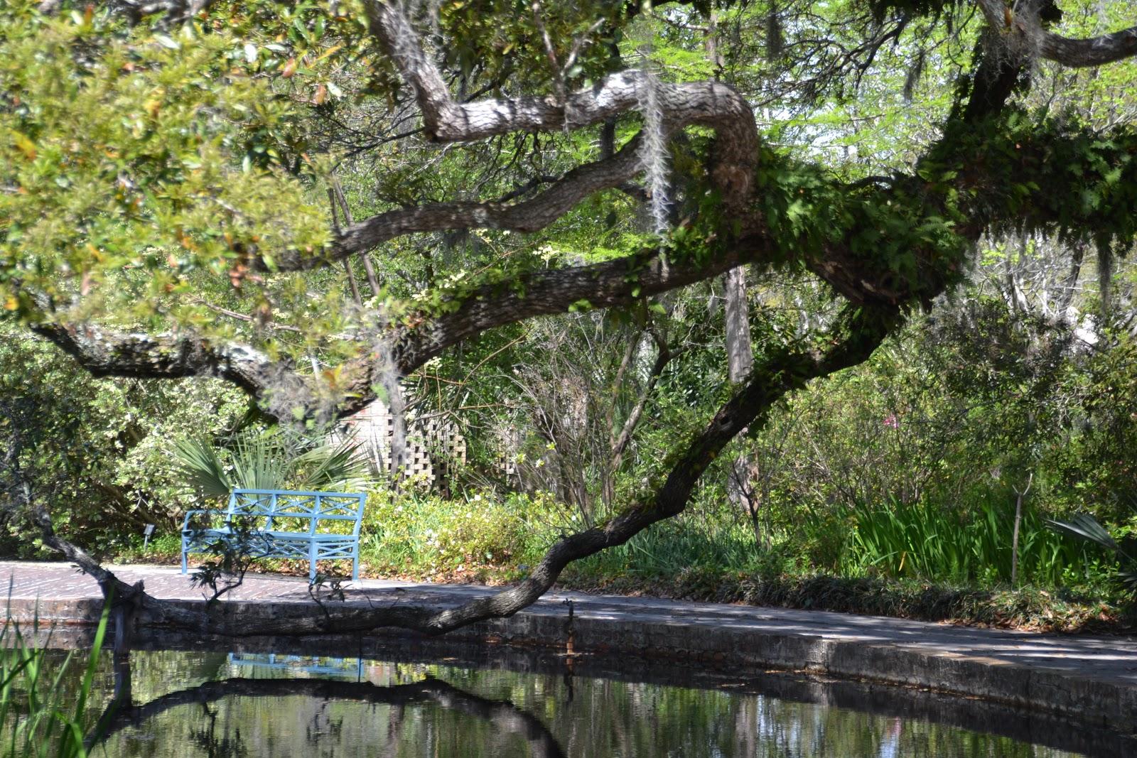 Elaine\'s Blogging World: Myrtle Beach - Spanish Moss Covered Trees