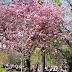 Sounds of Spring #CityDailyPhoto