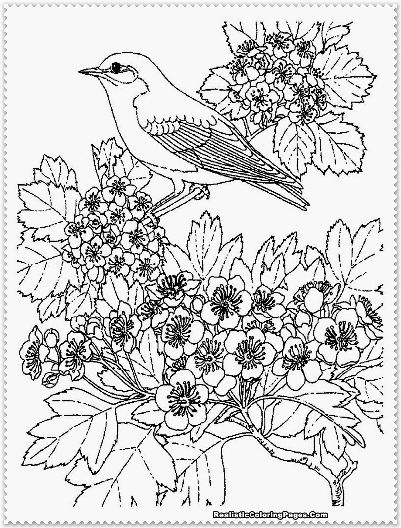Bird coloring pages realistic realistic coloring pages for Coloring pages birds